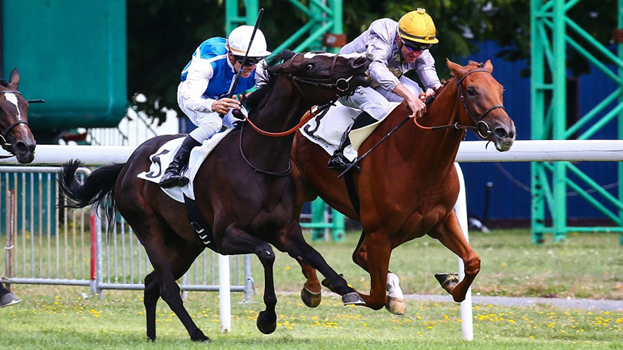 Horse Betting News: How Fast Can a Horse Run