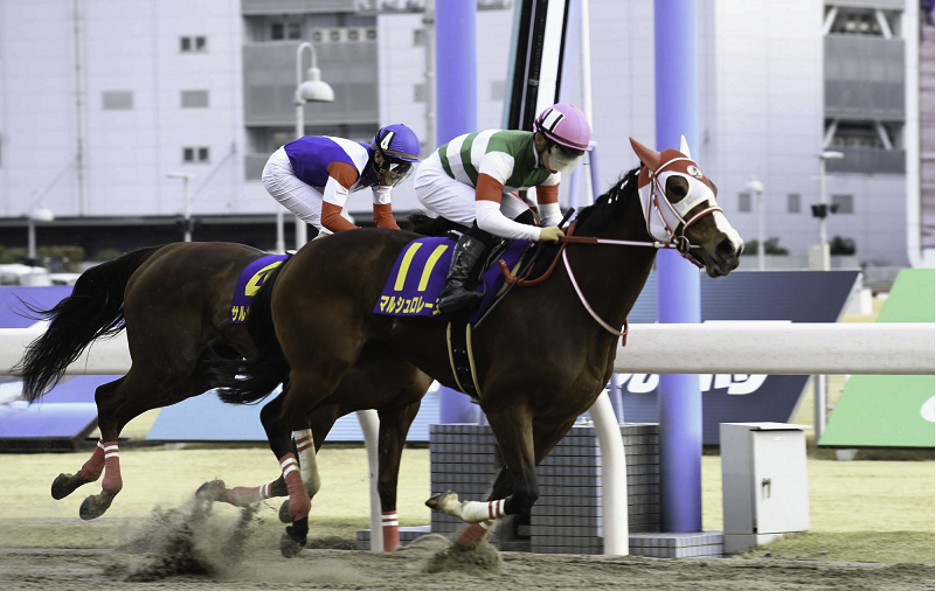 Knowing Horse Racing Tracks